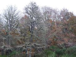 Líquenes Parque Nacional Peneda-Gerês A